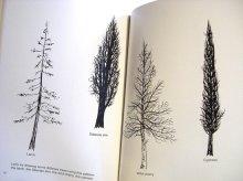 他の写真2: ブルーノ・ムナーリ Bruno Munari / drawing a tree 木をかこう